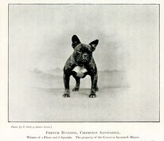 Darling French bulldog from  Vintage Printable. Carte de visite was a type of small photograph which was patented in Paris, France by photographer André Adolphe Eugène Disdéri in 1854, but first used by Louis Dodero. Each photograph was the size of a visiting card & became enormously popular.