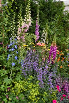 Mixed late spring / early summer garden of Nepeta catmint, tall vertical perennial plants of Delphinium and Digitalis foxglove, Achillea, A. English Garden Design, Cottage Garden Design, Cottage Garden Plants, Garden Beds, Purple Garden, Shade Garden, Flowers Perennials, Planting Flowers, Tall Perennial Flowers
