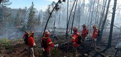 Gobierno confirma sospechas de intencionalidad tras incendio forestal en Valparaíso - BioBioChile