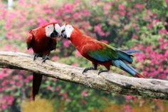 #formationanimaliere, #soindesanimaux, #perroquet,http://www.educatel.fr/domaine/24-elevage-soins-aux-animaux/formations/120-auxiliaire-de-sante-animale
