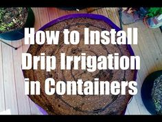 It's important to have a separate watering system for your containers - this one is inexpensive, quick to install, saves me time (no more hand watering) and gives my container garden the consistent  it needs to produce a lot of veggies for me.   Watch the step-by-step how-to video 🎥 (link in profile).  Comment with a 💦if you use drip irrigation for your container gardening!  How to Install a Drip Irrigation System in Containers - Growing Your Fal...