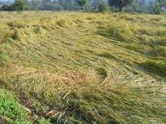 बेमौसम बारिश से फसल बरबाद होने की आशंका के मद्देनजर आम की कीमतें इस साल उसे खास बना