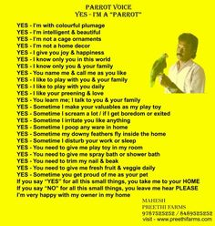 Voice of Tamed Parrot