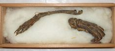 Mummified remains of the Kappa Mythological Creature (http://www.ancient-origins.net 2014)