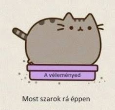Pusheen Cute, Grumpy Cat, Funny Moments, Jokes, Lol, Creative, Pictures, Kawaii, Chocolate