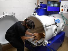 We are proud to introduce our newest veterinary medical treatment, Hyperbaric Oxygen Therapy (HBOT)! This safe, and painless treatment, is used to accelerate the healing process, and can benefit pets with a wide array of illnesses. #GCVS is thrilled to be able to provide this type of therapeutic care to our ill, and wounded patients. Read more about HBOT at www.mygcvs.com! #new #healing #dogs #cats