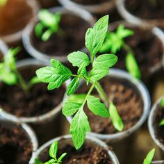 Hardening Off Plants and Seedlings - Organic Gardening - MOTHER EARTH NEWS