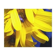 Blue Bee On Yellow Sunflower Wrapped Canvas