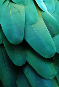blue green feathers