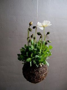String Gardens, this link is all in chinese and my computer wont translate but need to find directions to make these and hang on the porch
