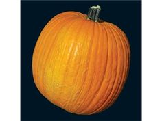 Connecticut Field Pumpkin | Baker Creek Heirloom Seed Co