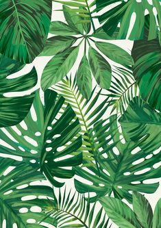 Wildflowers Photo Art Print - - See amazing artworks of Displate artists printed on metal. Easy mounting, no power tools needed. Palm Leaf Wallpaper, Plant Wallpaper, Tropical Wallpaper, Art Tropical, Tropical Leaves, Tropical Print Fabric, Palm Tree Leaves, Jungle Pattern, Art
