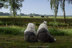 https://flic.kr/p/KfmUw7 | Watching sheep