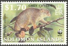 Grey Cuscus (Phalanger orientalis)