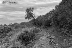 #monochrome #misty #morning #hike #californiadreaming  #losleonescanyon fineart #sea  #view of the #pacificocean #malibu #pch #bnw #mistymountains #landscape #nikon #bnw_legit #nikonphotography #nikonnofilter #lostinla  #instagood #instagram #blackandwhitephotography #nature #capture  #wanderlust