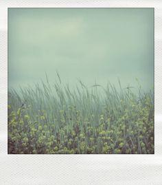 Flowers polaroid.