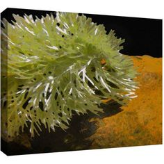 Dean Uhlinger Natural Selection Gallery-Wrapped Canvas, Size: 18 x 24, Green