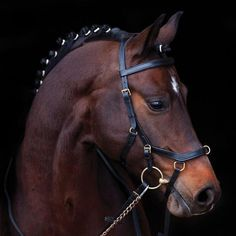 A NEW Bridle for Unrivaled Comfort! Designed from the inside out to fit the shape of the horse's skull, Horseware's Rambo® Micklem MultiBridle is the most comf