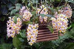Картинки по запросу как растут орхидеи в природе фото