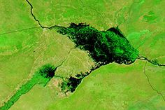 Flooding on the Zambezi River : Image of the Day : NASA Earth Observatory