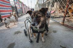 Protection animale en Chine - décembre 2014 - Cherki