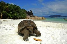 Seychelles | Insolit