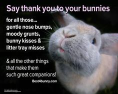 I'm grateful to our bunnies for their cute and funny natures, but I don't think they care at all. They're all about the food.