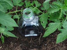 Drip Irrigation for garden or container plants