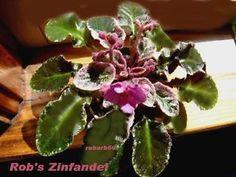 Rob's Zinfandel