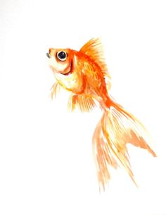 Goldfish origiinal watercolor painting 10 X 8 in by ORIGINALONLY, $24.00