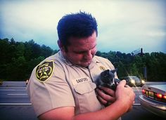 Kitten Survives 130-Mile Trek in a Car's Engine Compartment | petMD