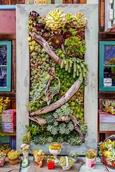 Advantages of Wall Container Gardening Growing the gardens vertically is just using the vertical space for growing flowers herbs or even root crops For this purpose you. Succulent Frame, Vertical Succulent Gardens, Vertical Garden Design, Succulent Wall Art, Succulent Gardening, Container Gardening, Organic Gardening, Vertical Planter, Indoor Gardening