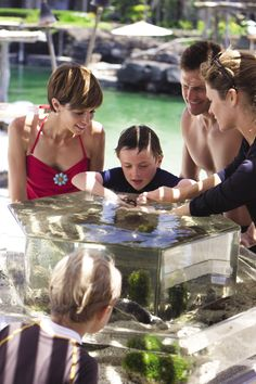 Kids like the sea creatures in our touch tank
