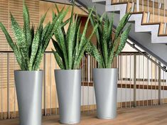 NewPro Containers offers the NEW Lechuza Diamante tall planter at wholesale pricing to the trades. NewPro is a direct supplier of outdoor and indoor Lechuza planters, plant containers, and flower pots. Sansevieria Cylindrica, Sansevieria Plant, Planting Succulents, Potted Plants, Planting Flowers, Suculentas Interior, Snake Plant Care, Tall Planters, Office Plants