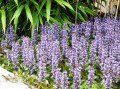 Ten Perennial Groundcovers