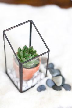 Hand Cut and Soldered Glass Chic, Sloping  Box Terrarium // Air Plants // Succulents // Home Decor // Wedding Centerpieces // Rustic