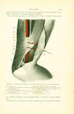 1897 Cuisse artère fémorale canal troisième adducteur Planche Originale P. Tillaux Anatomie Chirurgie 19ème siècle de la boutique sofrenchvintage sur Etsy