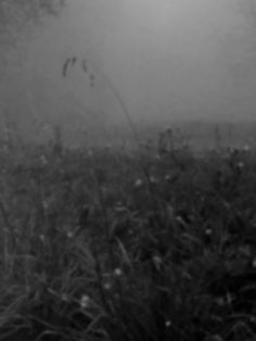 Dubbiosa, si nasconde dietro la tenue nebbia: la primavera con il suo passo lento.