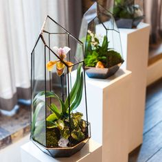 terrarium design school experience by the indytute | notonthehighstreet.com