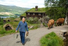 This is the cows Golin, Litago on Maihaugen in Lillehammer, Norway