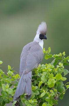 Pretty Birds, Love Birds, Beautiful Birds, Exotic Birds, Colorful Birds, South African Birds, Kinds Of Birds, Big Bird, African Animals