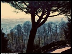 Collina - photographic processing (307) - elaborazione fotografica di un panorama di Pinerolo scattato dalla sua collina con un pino ...