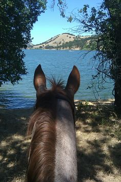 Sam E. at Del Valle in Livermore.  I think he would love to get over to the lake and cool off.  :)