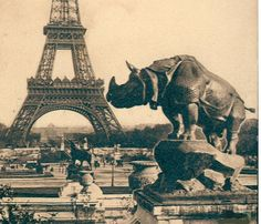 rhino statue in Paris