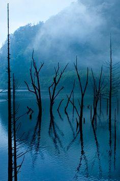 photo ... Lake Shizen, Nagano, Japan 自然湖 長野 ... black tree branches reflected by water ...