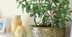 "Placing right plants at right locations brings good luck, says Feng Shui Practiced in China for over 3,000 years, Feng Shui (pronounced ""fung shway"") is the ancient Chinese study of the environment and its effect on hu…"