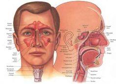 La congestion nasale est un état fréquent causé par les rhumes et les sinusites hivernales. Il se résorbe naturellement au bout d'une semaine mais peut parfois s'infecter et se compliquer causant une gêne respiratoire importante. Voici une méthode rapides pour remédier à cet état: Vous devez pousser votre langue contre le palais et mettez votre …