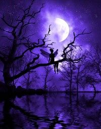 Julie Fain | Heaven and Earth Designs - Celestial Night