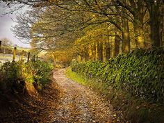 Country lane in the Yorkshire Dales