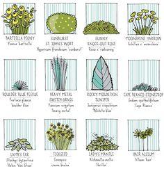 Lisa Orgler Design: plants for my heavy metal garden!